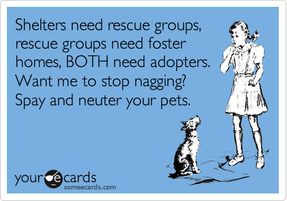 Shelters need rescue groups, rescue groups need foster homes, BOTH need adopters. Want me to stop nagging?  Spay and neuter your pets.