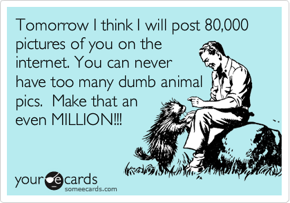 Tomorrow I think I will post 80,000 pictures of you on the internet. You can never have too many dumb animal pics.  Make that an  even MILLION!!!