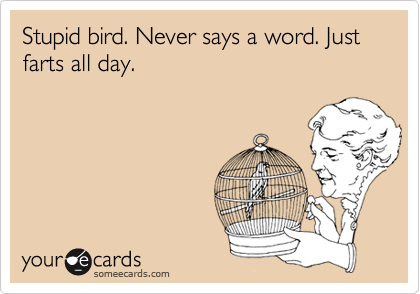 Stupid bird. Never says a word. Just farts all day.
