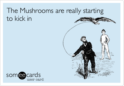 The Mushrooms are really starting to kick in