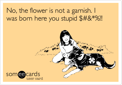 No, the flower is not a garnish. I was born here you stupid %24%23&*%!!