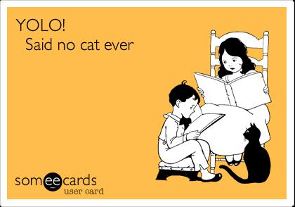 YOLO!          Said no cat ever
