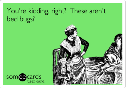 You're kidding, right?  These aren't bed bugs?