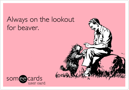 Always on the lookout for beaver.