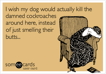 I wish my dog would actually kill the damned cockroaches  around here, instead  of just smelling their butts...