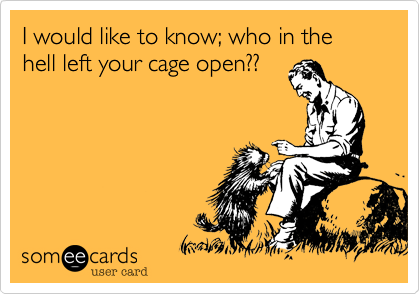 I would like to know; who in the hell left your cage open??