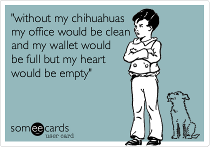 """""""without my chihuahuas my office would be clean and my wallet would be full but my heart would be empty"""""""