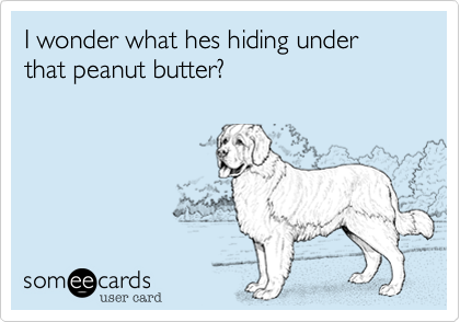 I wonder what hes hiding under that peanut butter?