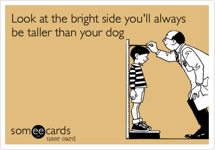 Look at the bright side you'll always be taller than your dog