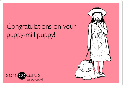 Congratulations on your puppy-mill puppy!