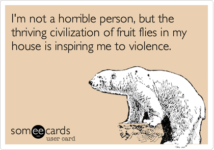 I'm not a horrible person, but the thriving civilization of fruit flies in my house is inspiring me to violence.
