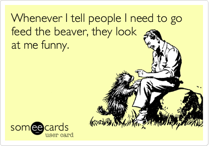 Whenever I tell people I need to go feed the beaver, they look at me funny.
