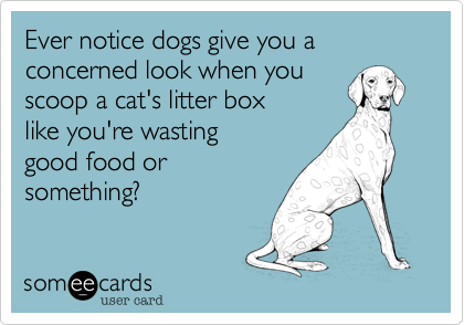 Ever notice dogs give you a  concerned look when you  scoop a cat's litter box like you're wasting good food or something?