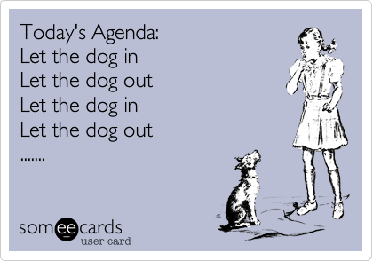 Today's Agenda:Let the dog inLet the dog outLet the dog in Let the dog out.......