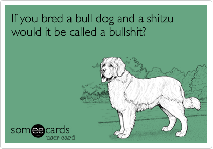 If you bred a bull dog and a shitzu would it be called a bullshit?