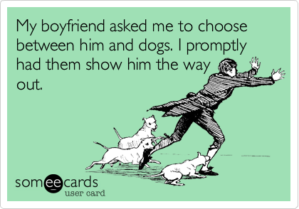 My boyfriend asked me to choose between him and dogs. I promptly had them show him the wayout.