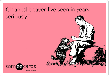 Cleanest beaver I've seen in years, seriously!!!