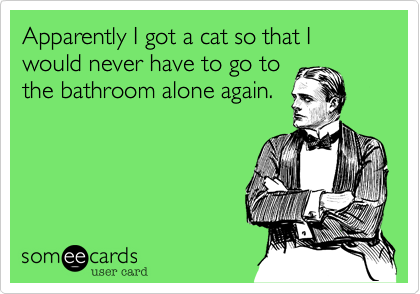 Apparently I got a cat so that I would never have to go to