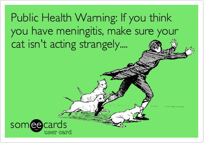 Public Health Warning: If you think you have meningitis, make sure your cat isn't acting strangely....