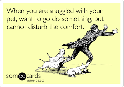 When you are snuggled with your pet, want to go do something, but cannot disturb the comfort.