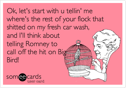 Ok, let's start with u tellin' me where's the rest of your flock that shitted on my fresh car wash,