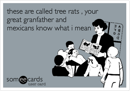 these are called tree rats , your great granfather andmexicans know what i mean