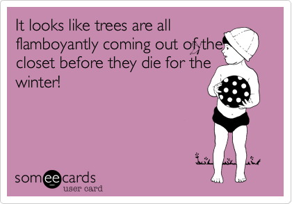 It looks like trees are all flamboyantly coming out of the closet before they die for the winter!