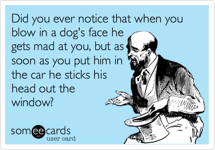 Did you ever notice that when you blow in a dog's face hegets mad at you, but assoon as you put him inthe car he sticks his head out thewindow?