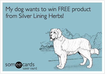 My dog wants to win FREE product from Silver Lining Herbs!