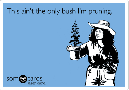 This ain't the only bush I'm pruning.