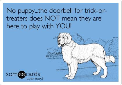 No puppy...the doorbell for trick-or-treaters does NOT mean they are here to play with YOU!