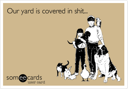 Our yard is covered in shit...
