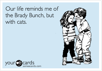 Our life reminds me of the Brady Bunch, but with cats.