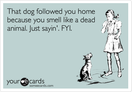 That dog followed you home because you smell like a dead animal. Just sayin'. FYI.