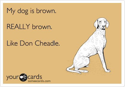 My dog is brown.REALLY brown.Like Don Cheadle.