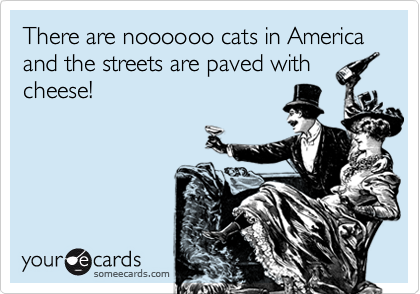There are noooooo cats in America and the streets are paved with