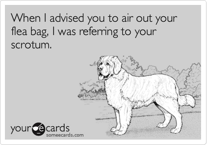 When I advised you to air out your flea bag, I was referring to your scrotum.