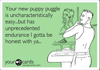 Your new puppy puggle is uncharacteristicallyeasy...but hasunprecedentedendurance I gotta behonest with ya...