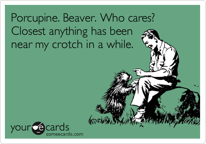 Porcupine. Beaver. Who cares?