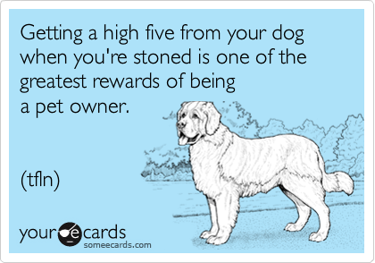 Getting a high five from your dog when you're stoned is one of the greatest rewards of being  a pet owner.   (tfln)