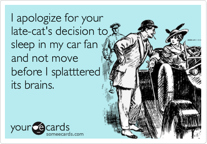 I apologize for yourlate-cat's decision tosleep in my car fanand not movebefore I splattteredits brains.