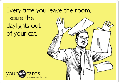 Every time you leave the room,  I scare the  daylights out of your cat.