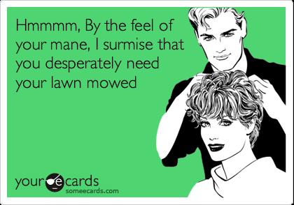 Hmmmm, By the feel ofyour mane, I surmise thatyou desperately needyour lawn mowed