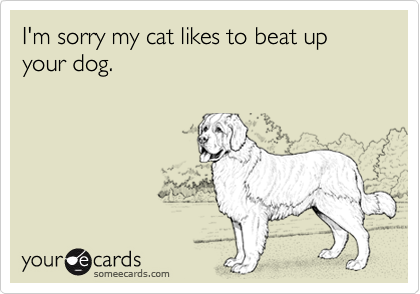 I'm sorry my cat likes to beat up your dog.