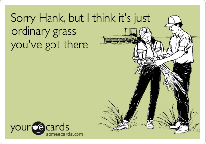 Sorry Hank, but I think it's justordinary grassyou've got there