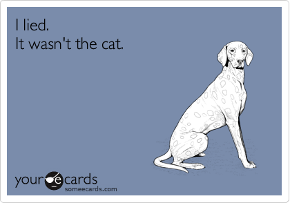 I lied.It wasn't the cat.