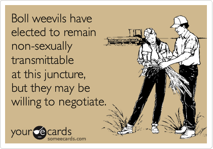 Boll weevils have elected to remain non-sexuallytransmittableat this juncture, but they may bewilling to negotiate.