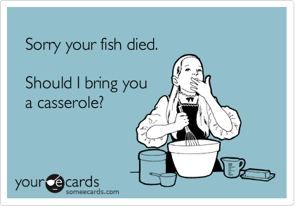 Sorry your fish died.     