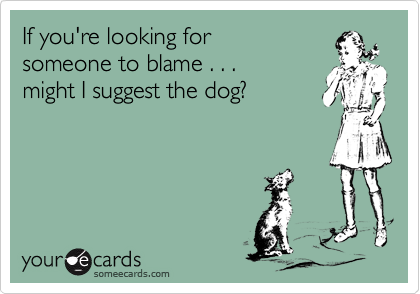 If you're looking for someone to blame . . . might I suggest the dog?