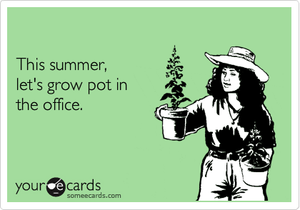 This summer,  let's grow pot in  the office.